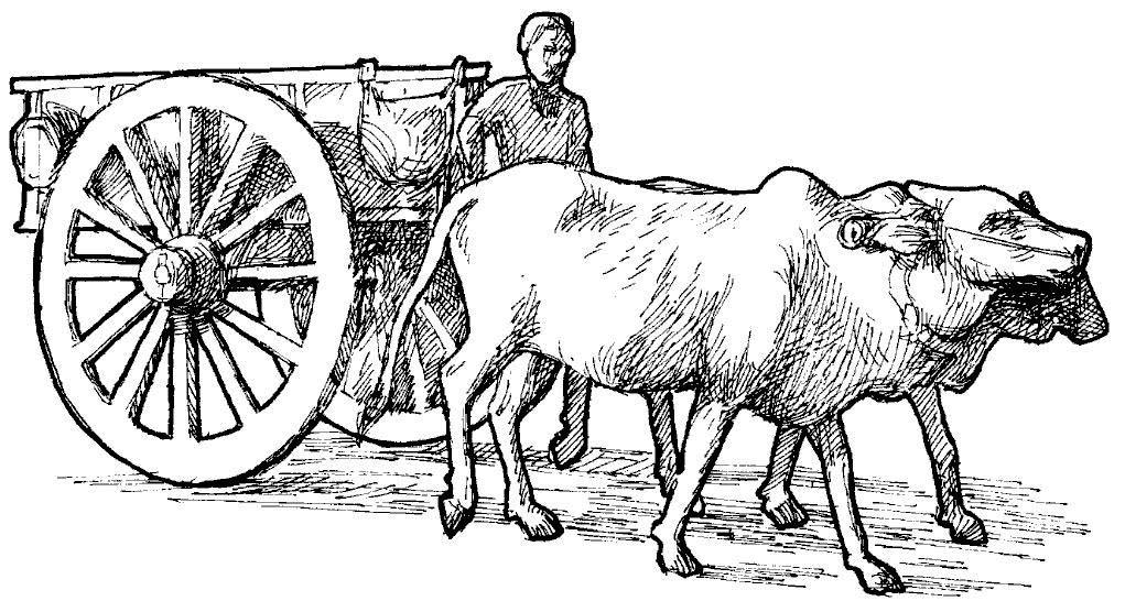 Proto as a farmer with his oxen! Image courtesy internet